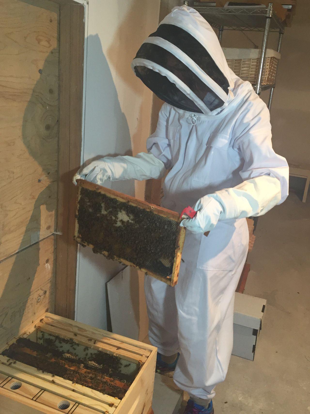 Bees beekeepers beekeeping environment hobby hobbyist