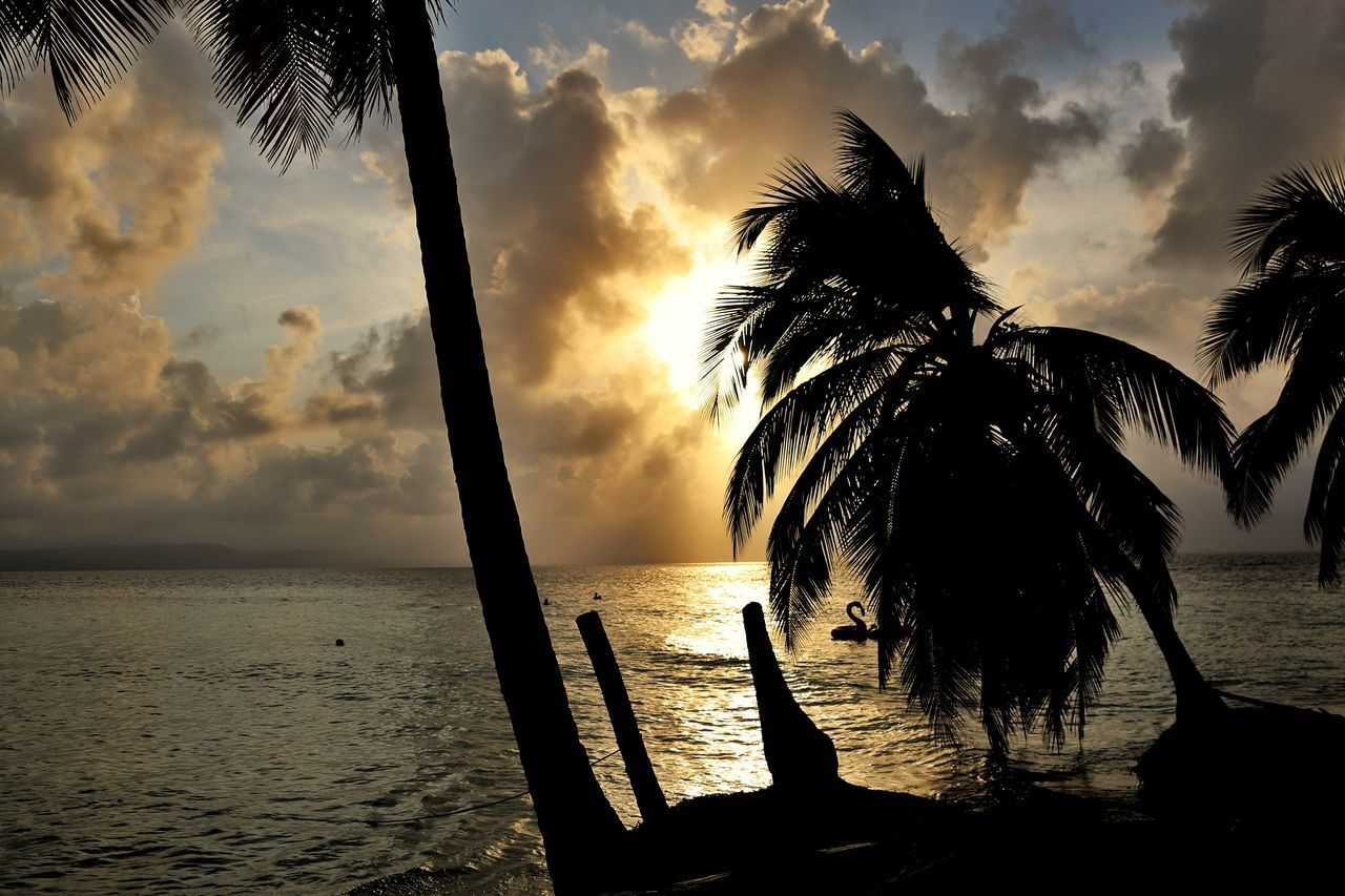 Sky Sunset Cloud - Sky Water Silhouette Nature No People Sunlight Outdoors Dramatic Sky Sea Tree Scenics Beauty In Nature Close-up Day Photography Photoshoot Night Nature Romantic Sky Caribe,paraiso Palmeras Palms Palms Trees