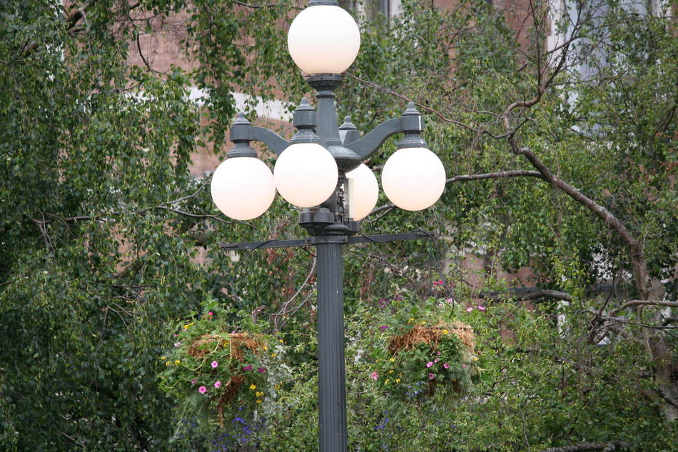 Close-up Day Electric Lamp Electric Light Grass Green Green Color Growth Illuminated Lamp Lighting Equipment Nature No People Outdoors Plant Pole Street Light The Fairmont Empress Hotel Tranquility Tree