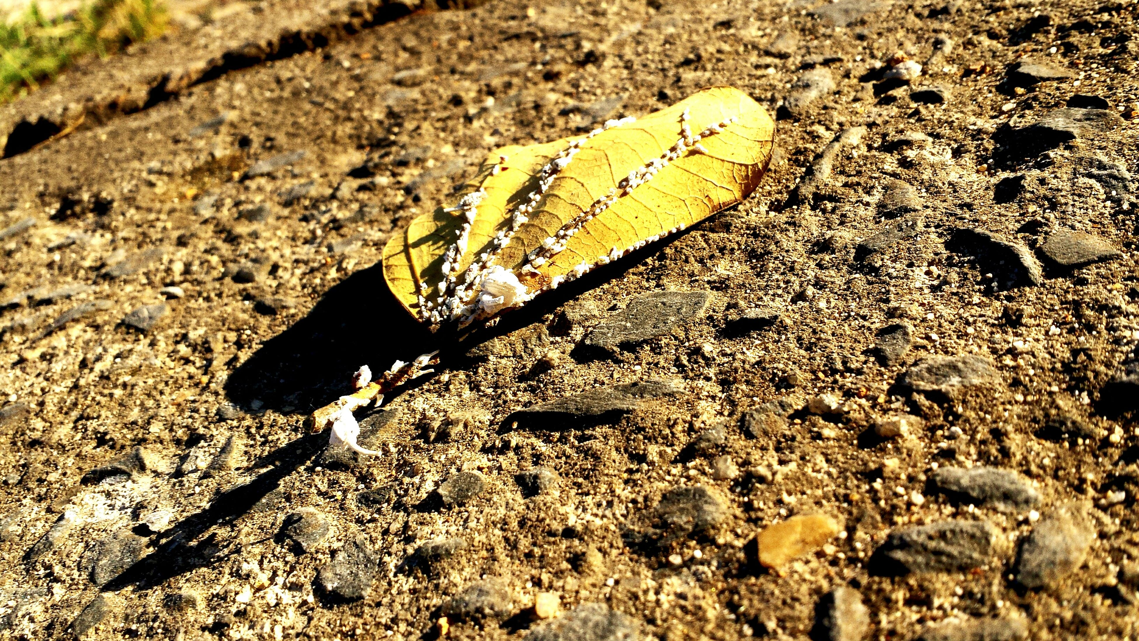 high angle view, yellow, field, day, close-up, insect, sand, ground, dirt, still life, single object, no people, leaf, outdoors, sunlight, one animal, nature, textured, rock - object, dry