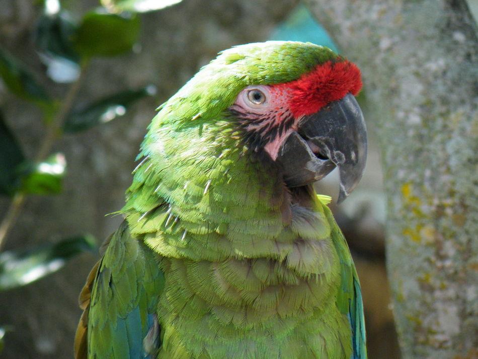 Parrot Animal Themes Animal Wildlife Animals In The Wild Beak Bird Close-up Nature No People One Animal Outdoors Parrot