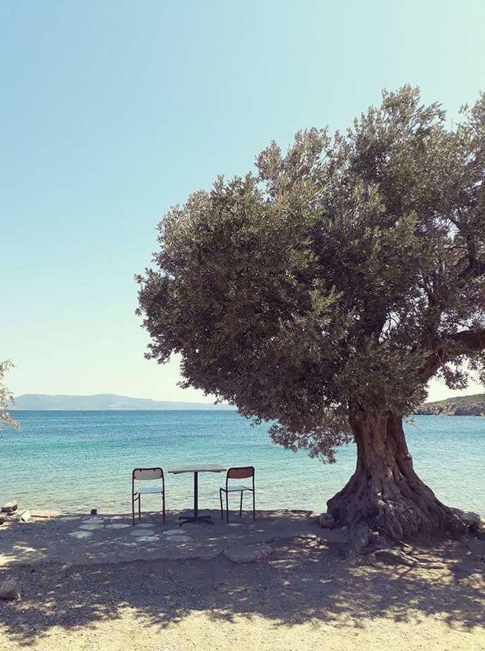 Izmir Urla Balıklıova Kamping Sea Serenity Loneliness Olive Tree Tree Beach Sky Water Sand Horizon Over Water No People Nature Kamp Childhood Day Clear Sky Outdoors