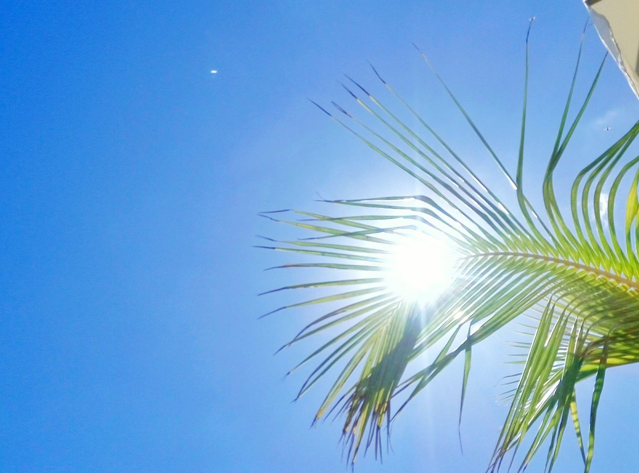 Sunny Mood Fresh Clear Sky Sunlight No People Sky Palmtree Palmera Cielo Sol Verano Summer