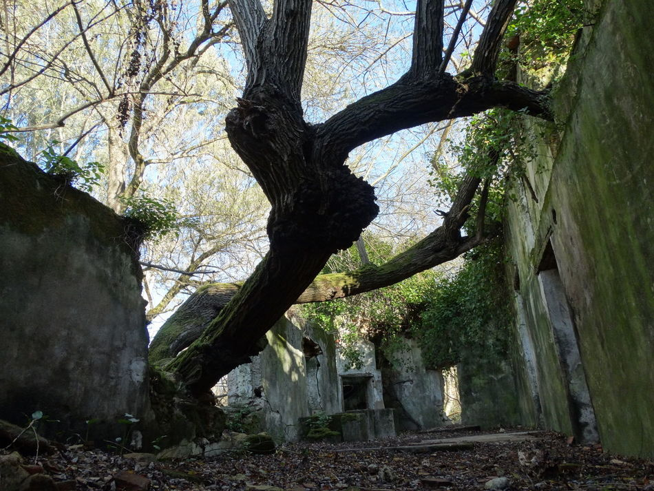 Beauty In Nature Branch Day Growth Inside The House Nature No People Old House Old Water Mill Outdoors Ruins Sky Tree Tree Trunk