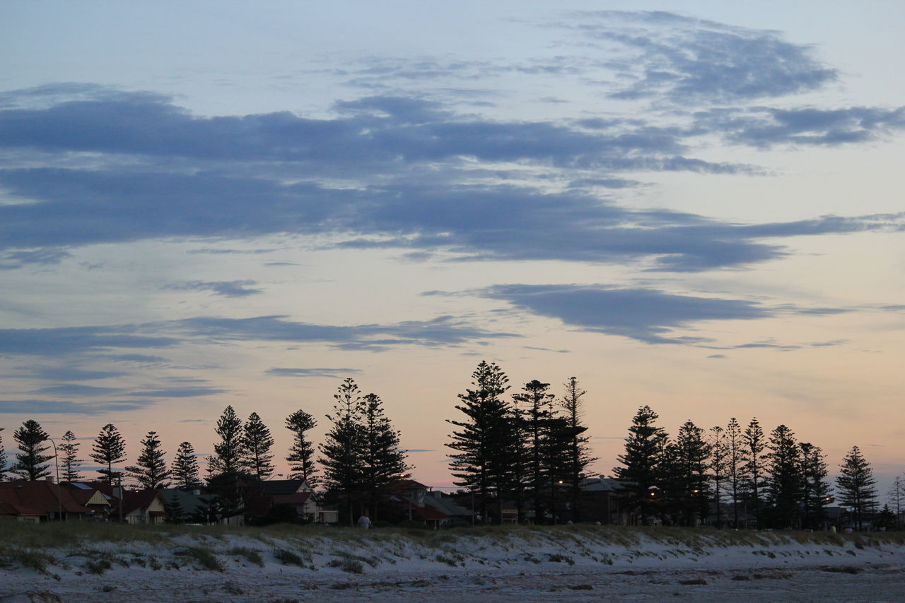 Beach Photography Seaside Conifers At Dusk Clouds And Sky