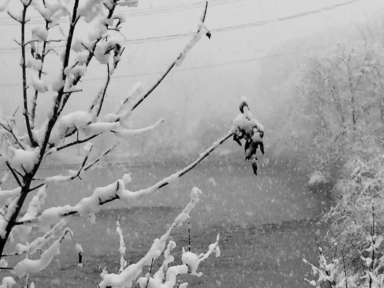 Winter Snow Cold Temperature Weather Nature Outdoors Day Bare Tree No People Cold Winter Wintertime Snow ❄ Snow Covered Snow Day Nature Nature Photography