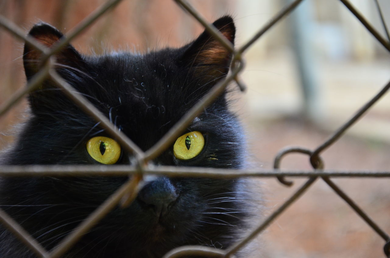 Alertness Animal Head  Animal Themes Behindthefence Black Black Cat Cat Close-up Curiosity Depth Of Field Domestic Animals Domestic Cat Feline Fence Looking At Camera One Animal Pets Portrait Relaxation Relaxing Selective Focus