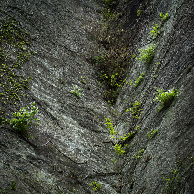 Day Mine Moss Mountain Nature No People Nokogiriyama Outdoors Plant Rock - Object Rock Face Rough Textured  Tree