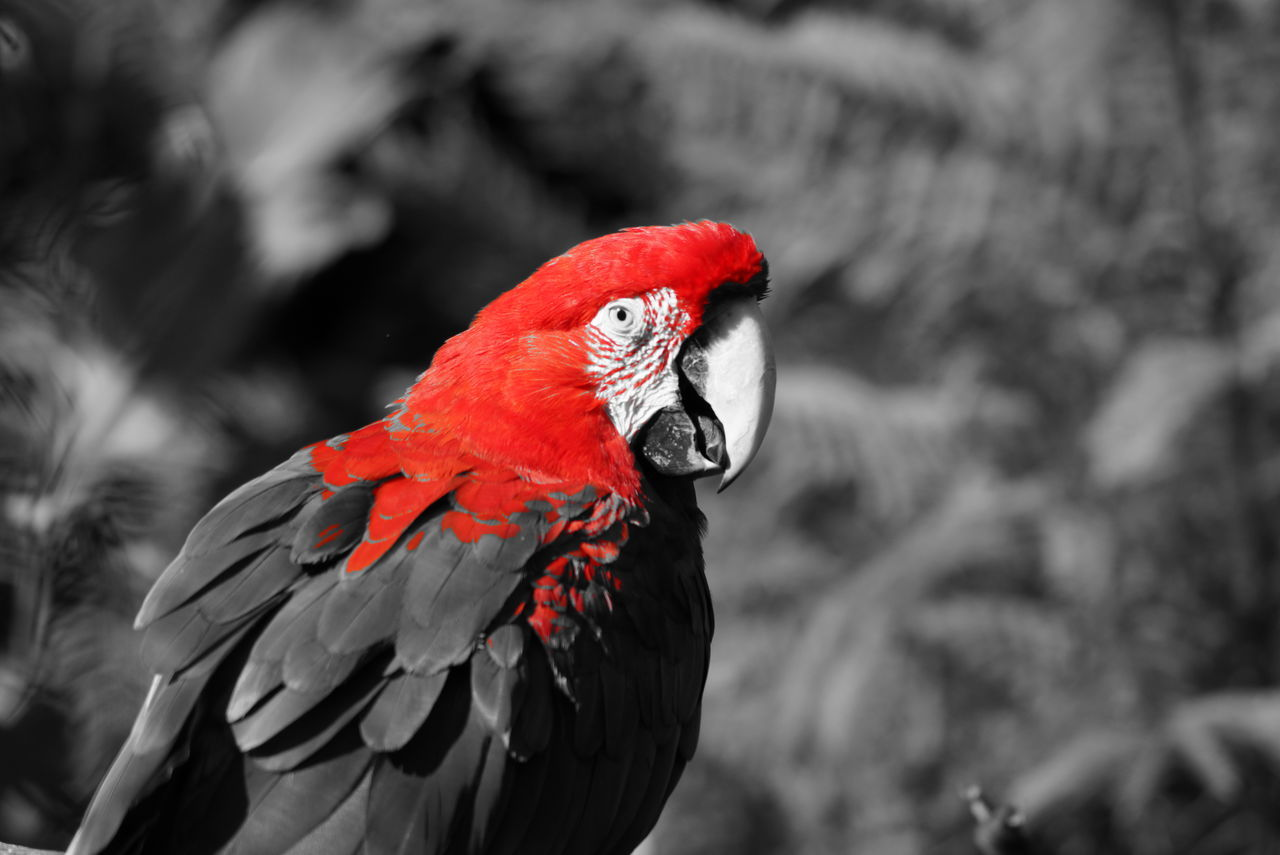 Animal Themes Argentina Bird Day Nature No People One Animal Outdoors Perching Red Temaiken