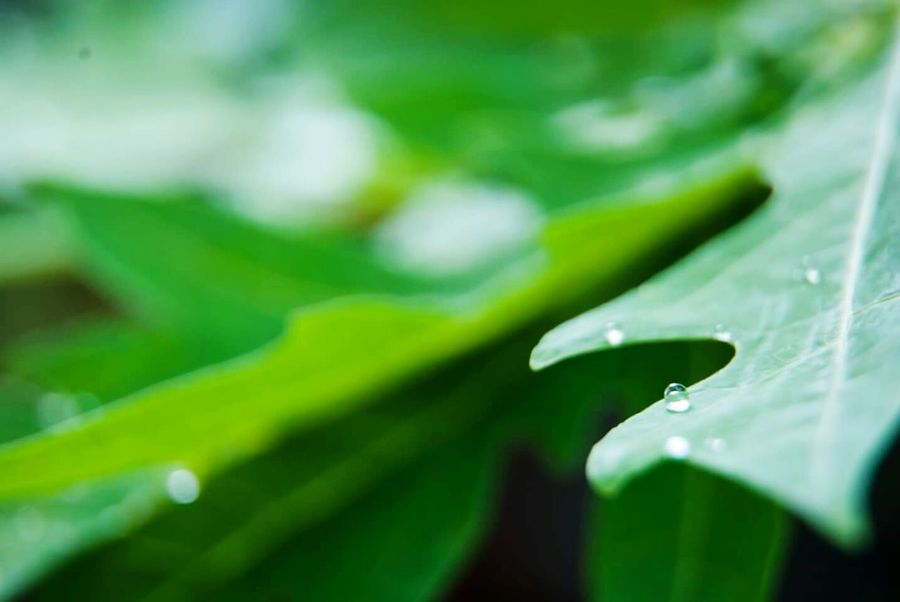Water Drops Water Droplets Green Leaves Macro_collection Macrogardener Macro Nature Ladyphotographerofthemonth Plantography Dropsoflife The Drops Series