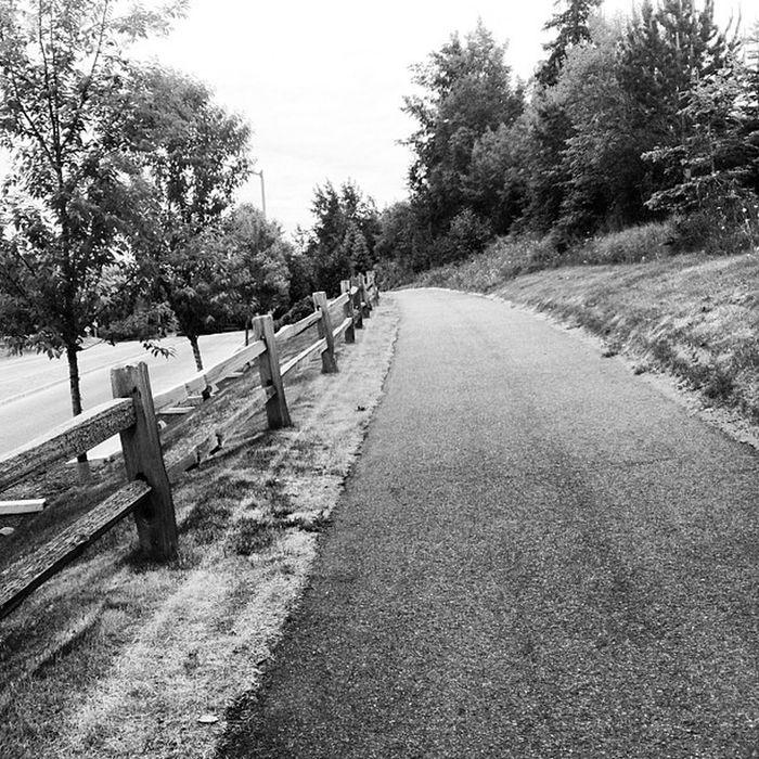 15 Mile Bike Ride bikeride alaska trail summer