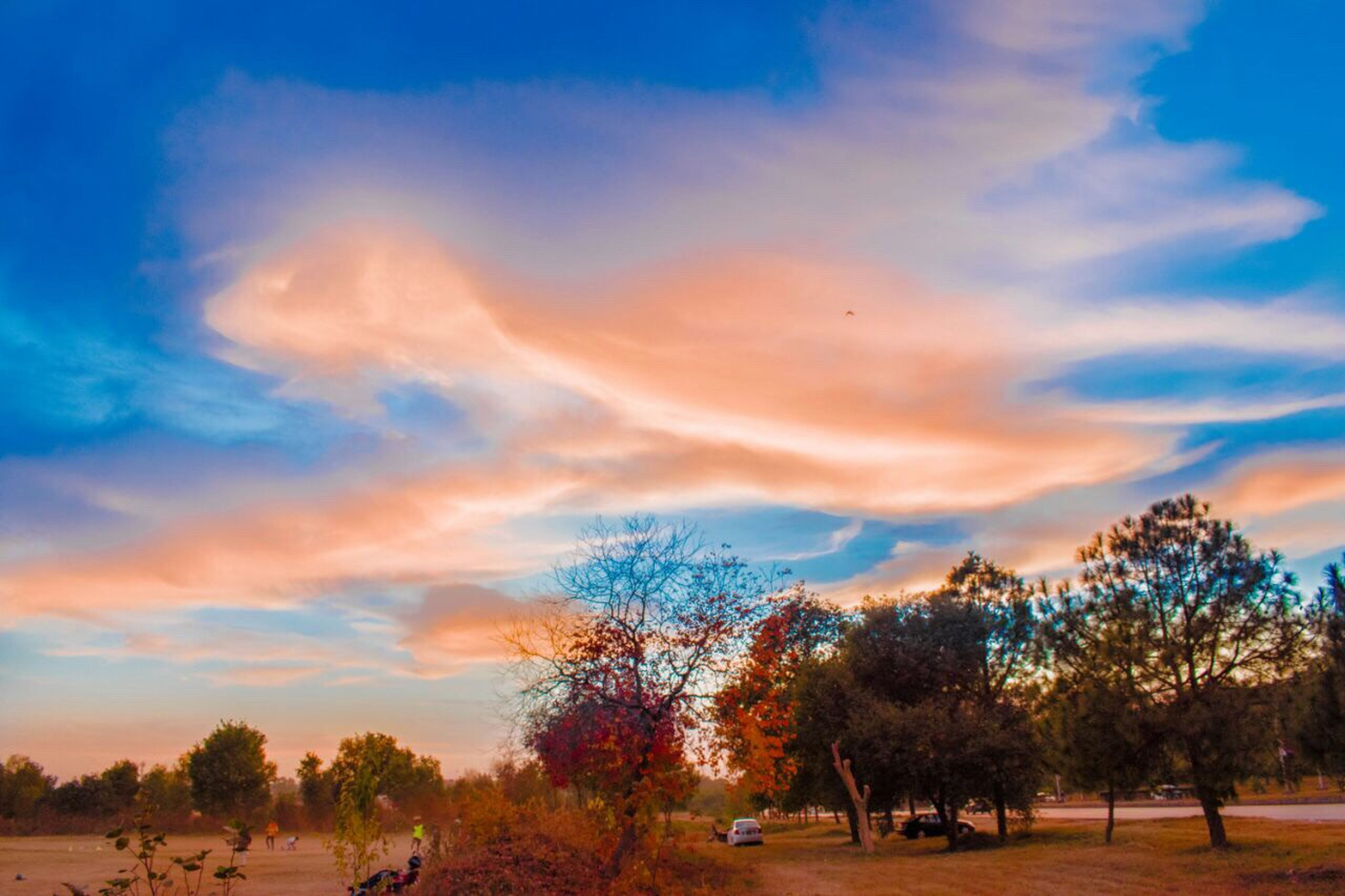 tree, sunset, sky, landscape, no people, nature, beauty in nature, outdoors, scenics, galaxy, day, african elephant