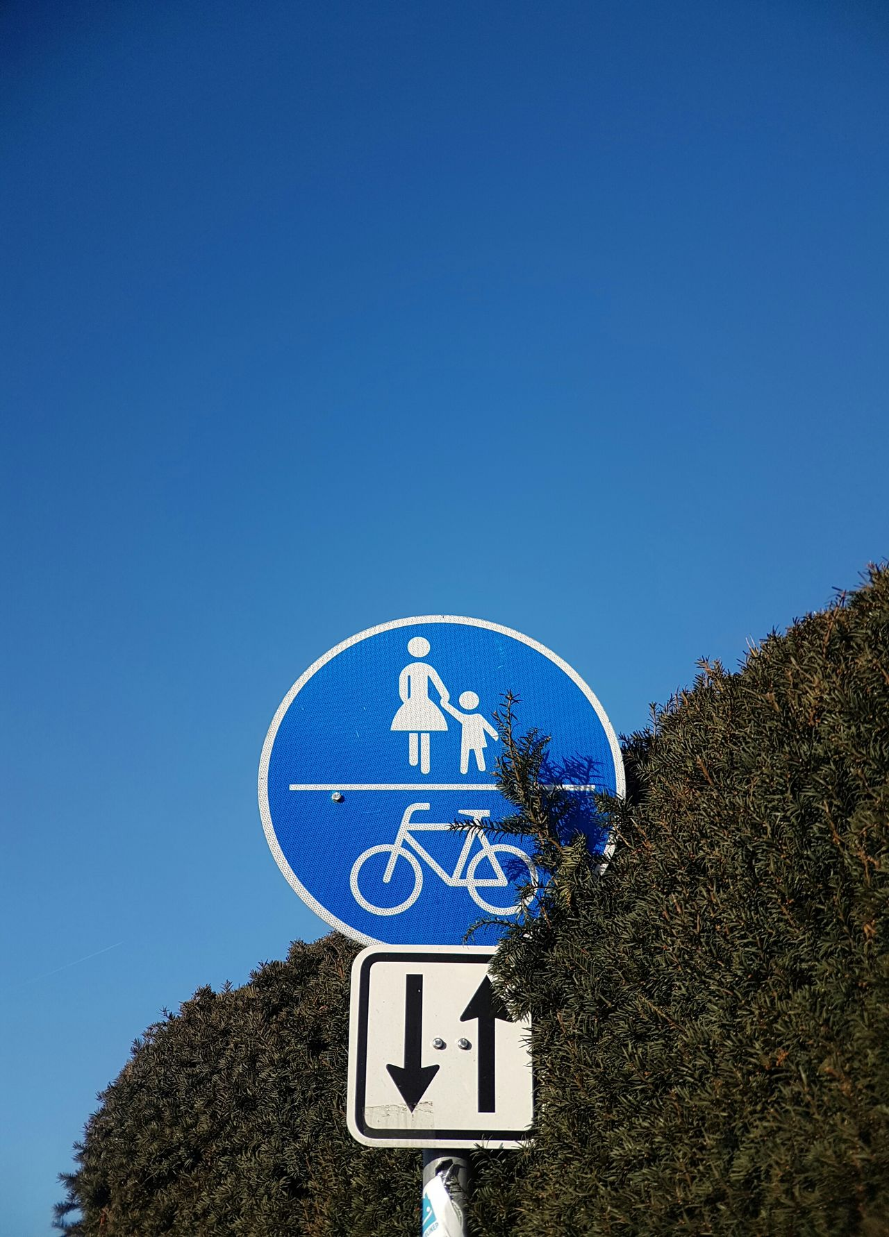 Blue Clear Sky No People Road Sign Road Signs Green Wall Background Walking Together Cover Walking Around The City  Straight Lines Arrow Sign Street Signs Attention Street Sign Bycicle Ride Signs Signs_collection Walking Around Walking Together Logo Bycicle Road Cycling Around Adapted To The City