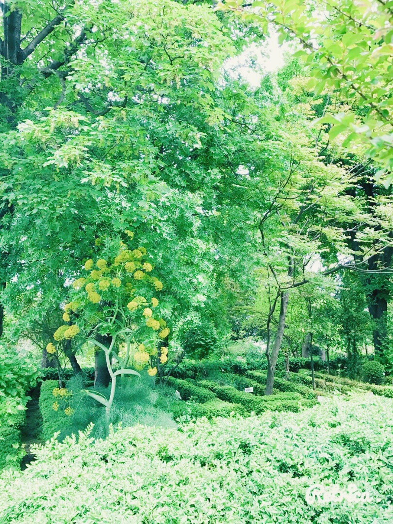 Growth Nature Green Color Green Plant Tree Leaf Beauty In Nature Tranquility Day No People Outdoors Beautiful Springtime ☘️🍀☀️✨ Freshness Arboretum Sunlight ☀✨ Field Tranquil Scene Foliage Branch