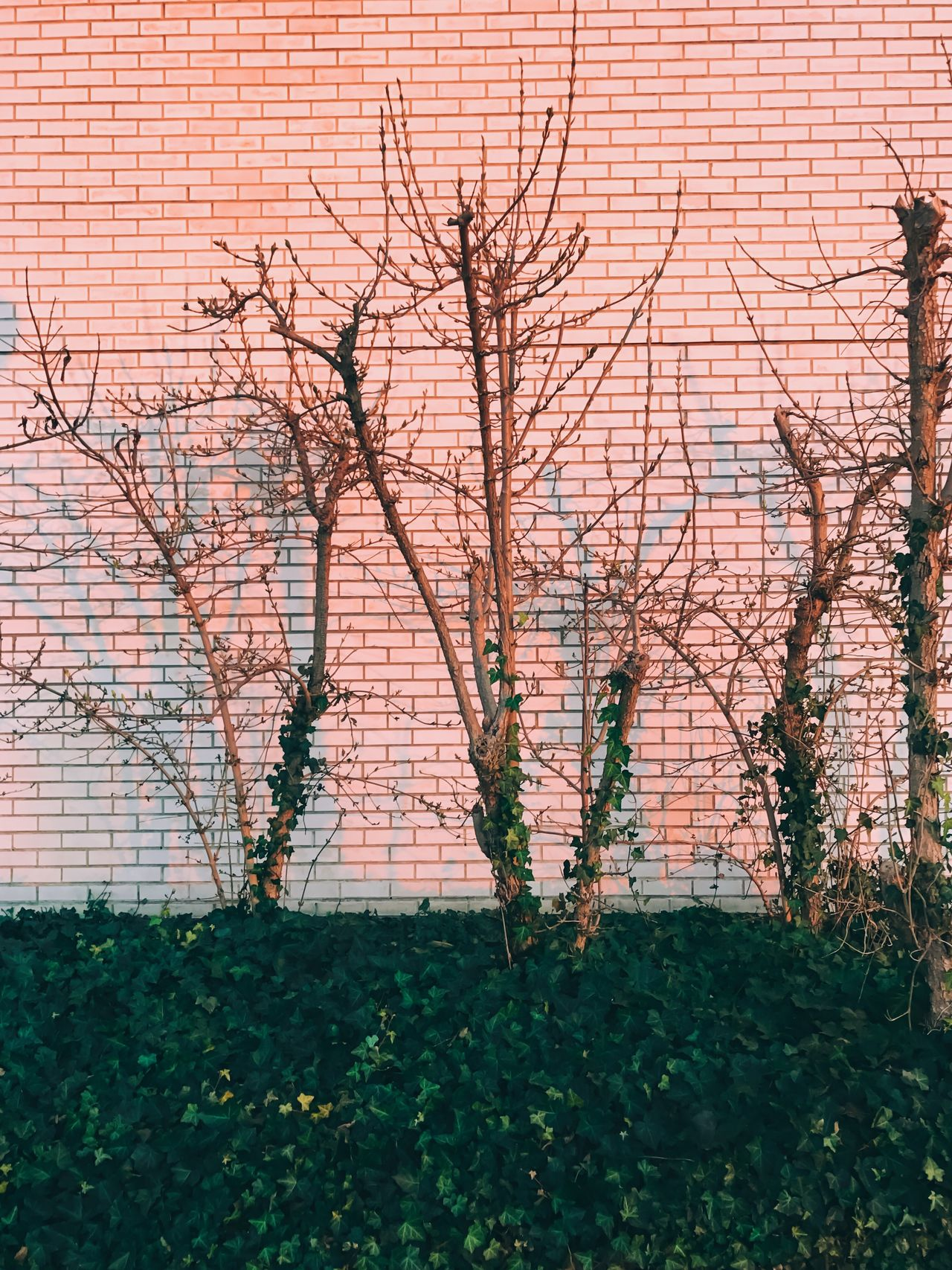 Tree Bare Tree Branch Nature Built Structure Growth Building Exterior Architecture Plant No People Outdoors Day Brick Wall Tranquility Beauty In Nature City Grass Sky