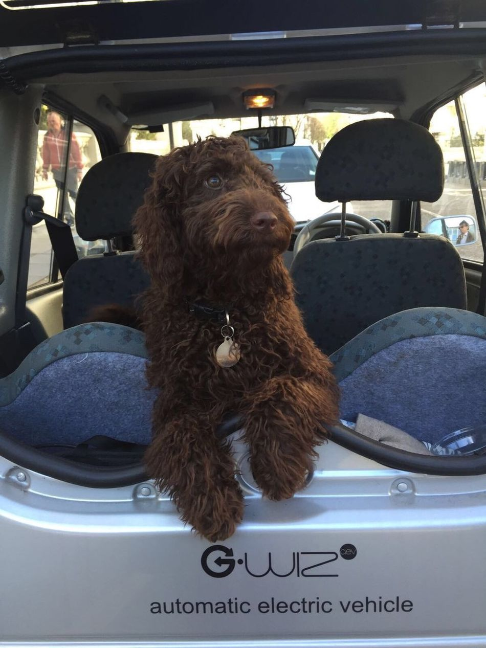 Doggy Days  Check This Out Sukie Marley ❤ The Things I Love Eco Friendly Gwhiz New labradoodle
