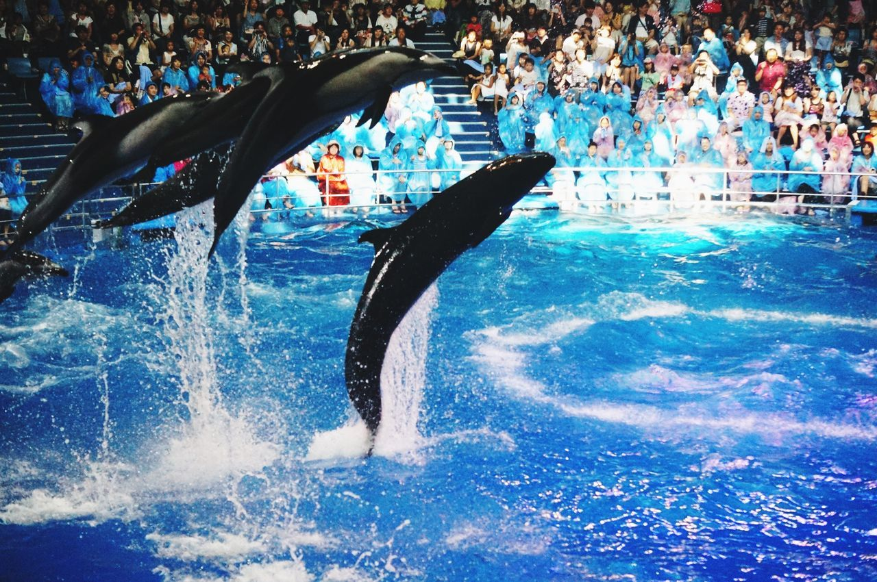 Taking Photos Beautiful Tokyo Dolphins DolphinShow Summer2015 品川