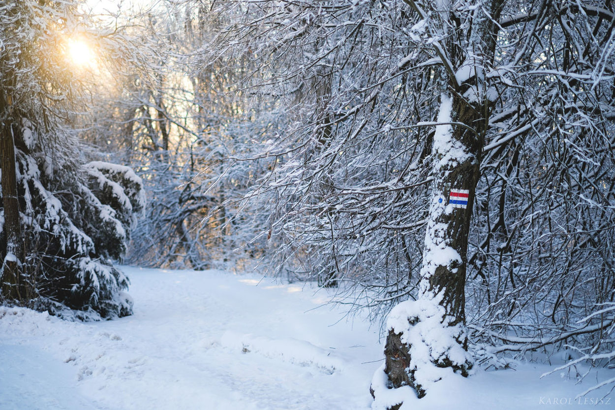 Beauty In Nature Cold Temperature Forest Góry świętokrzyskie Mountain Nature Snow Snowing Tree Trip Winter