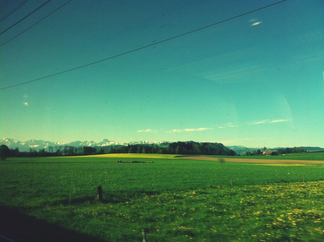 Crops on landscape