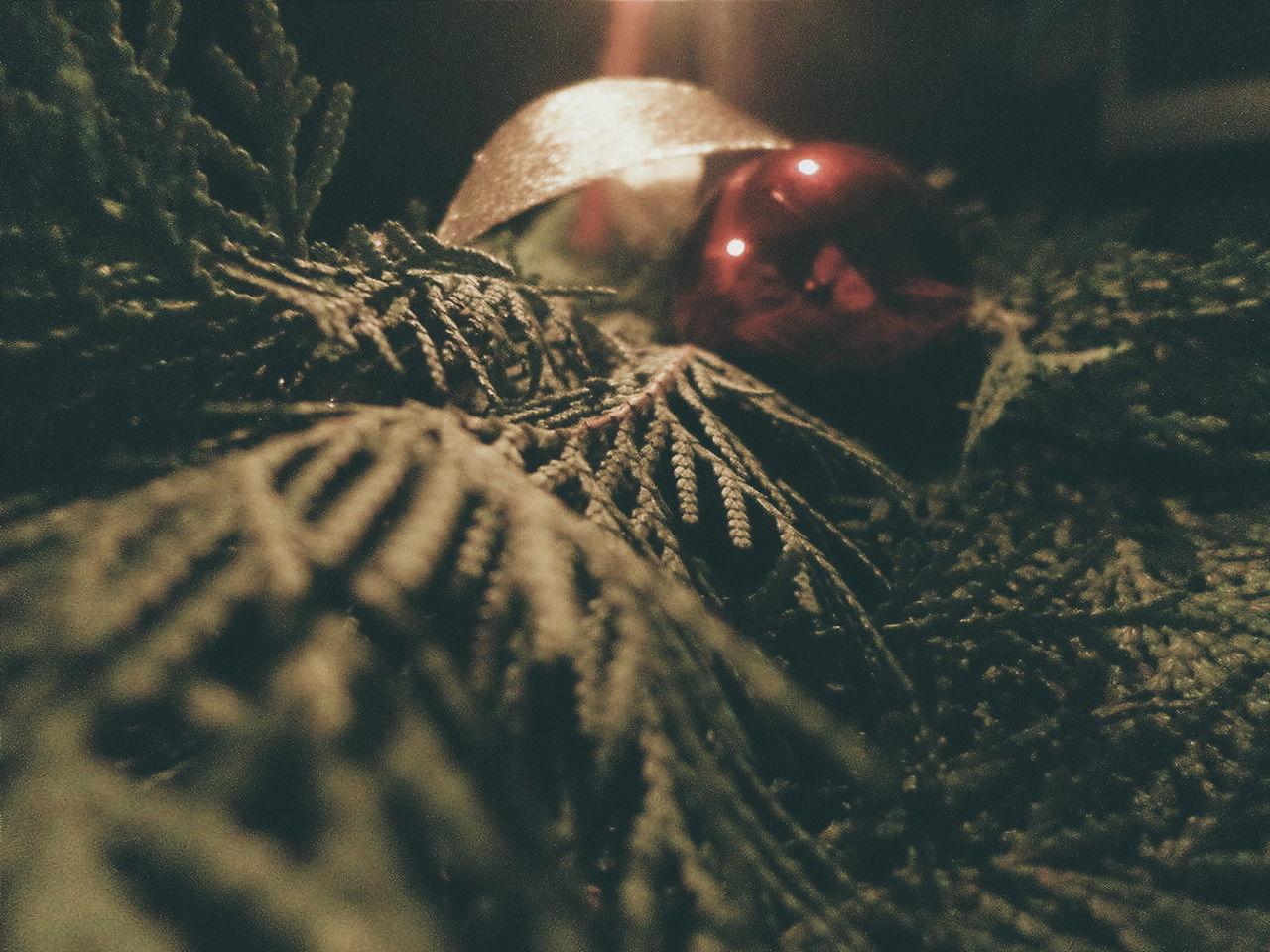 Beautiful stock photos of christmas tree, Christmas, Christmas Decoration, Christmas Tree, Close-Up