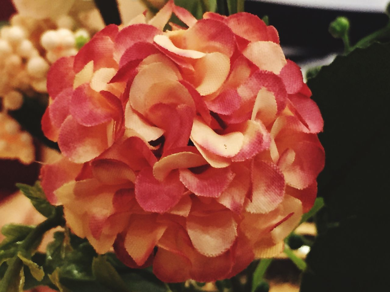 flower, petal, nature, beauty in nature, flower head, fragility, growth, plant, freshness, blooming, rose - flower, close-up, no people, outdoors, day