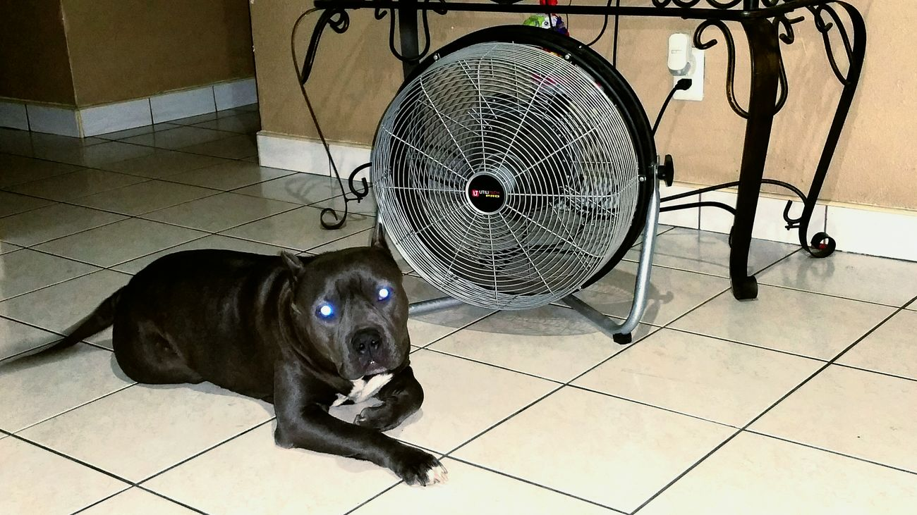 Staying Cool Beating The Heat Cali Livin' Dogslife