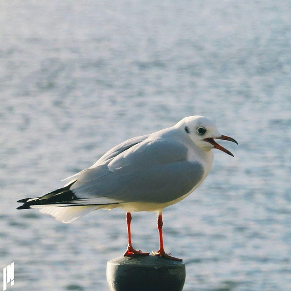 Gull Vscocam VSCO E5 Bird seagull post pose emirates royaldocks emiratesroyaldocs victoriadock royalvictoriadock rspb