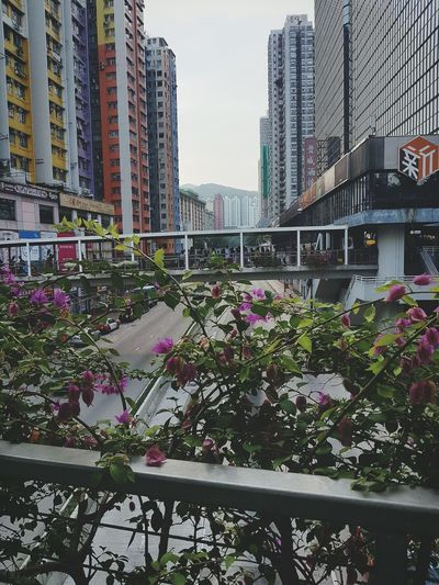 Only time will tell Time Daily Life Life Flowers City Hk Story My Story Small City Great Life