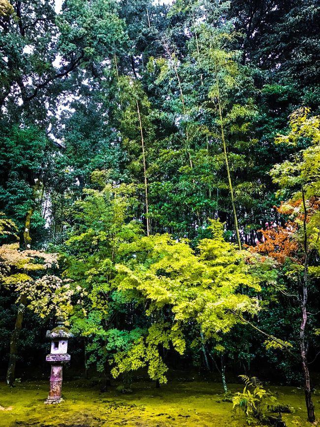 Kyoto Iphone7 No People Vibrant Color Wabi-sabi Moss Rainy Days Rain Green Color Green