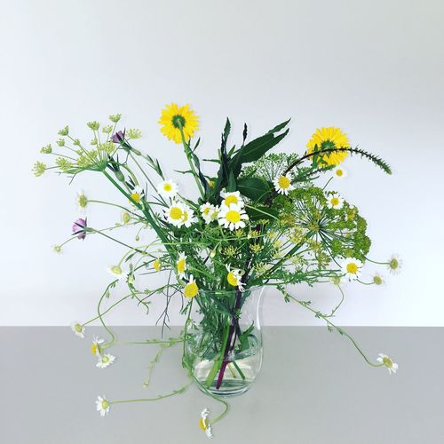 Flower Growth Plant White Background Fragility Nature Freshness No People Leaf Beauty In Nature Close-up Indoors  Day Flower Head
