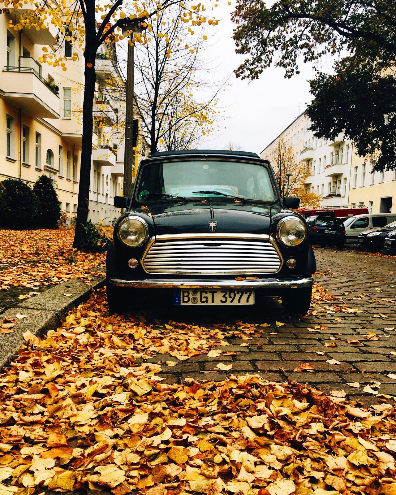 Mini in Berlin Leaf Autumn Transportation Tree Outdoors Car Mini German Transportation