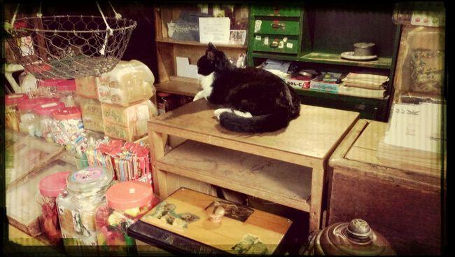 駄菓子屋と猫