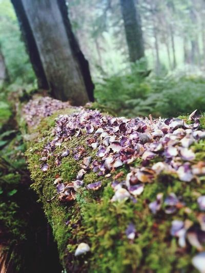 /Nature is the best place to recharge/ Mind  Wood Nature Enjoying Life