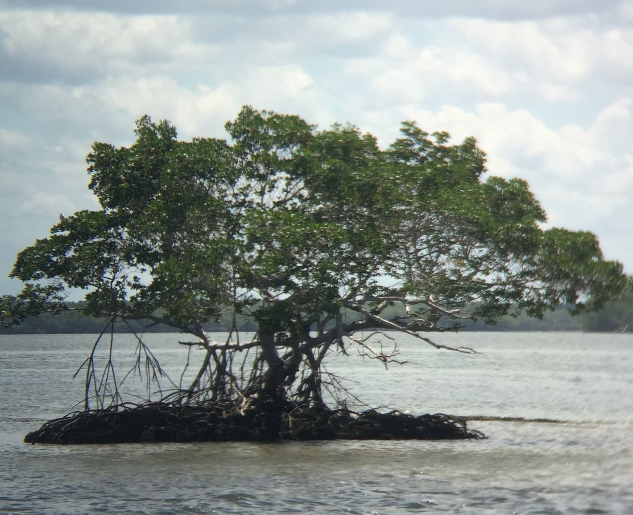 tree, sky, water, nature, no people, growth, day, cloud - sky, tranquility, outdoors, beauty in nature, scenics, sea