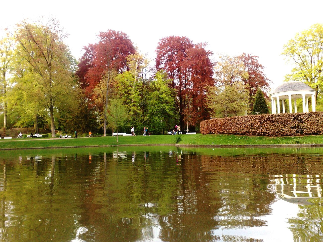 Beauty In Nature Trees Trees And Nature Trees And Water Trees And Bushes Reflection Green Color Outdoors Water Lake Strasbourg Beauty In Nature