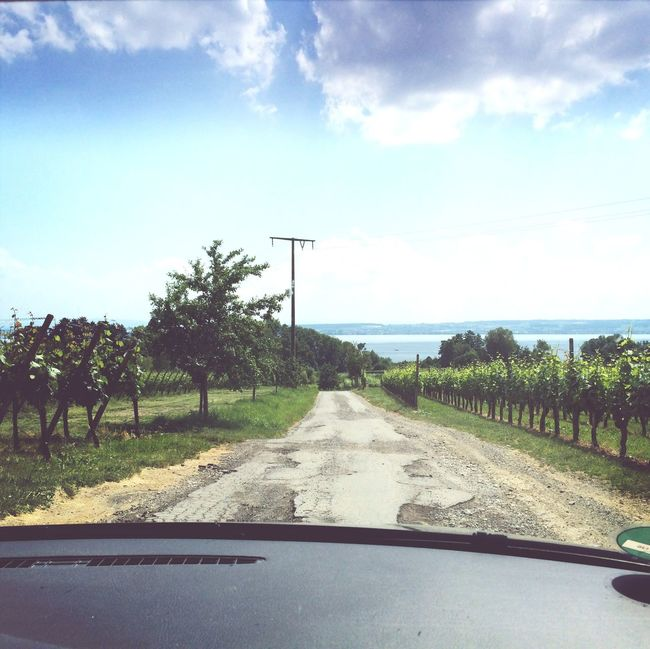 welcome back home Wine