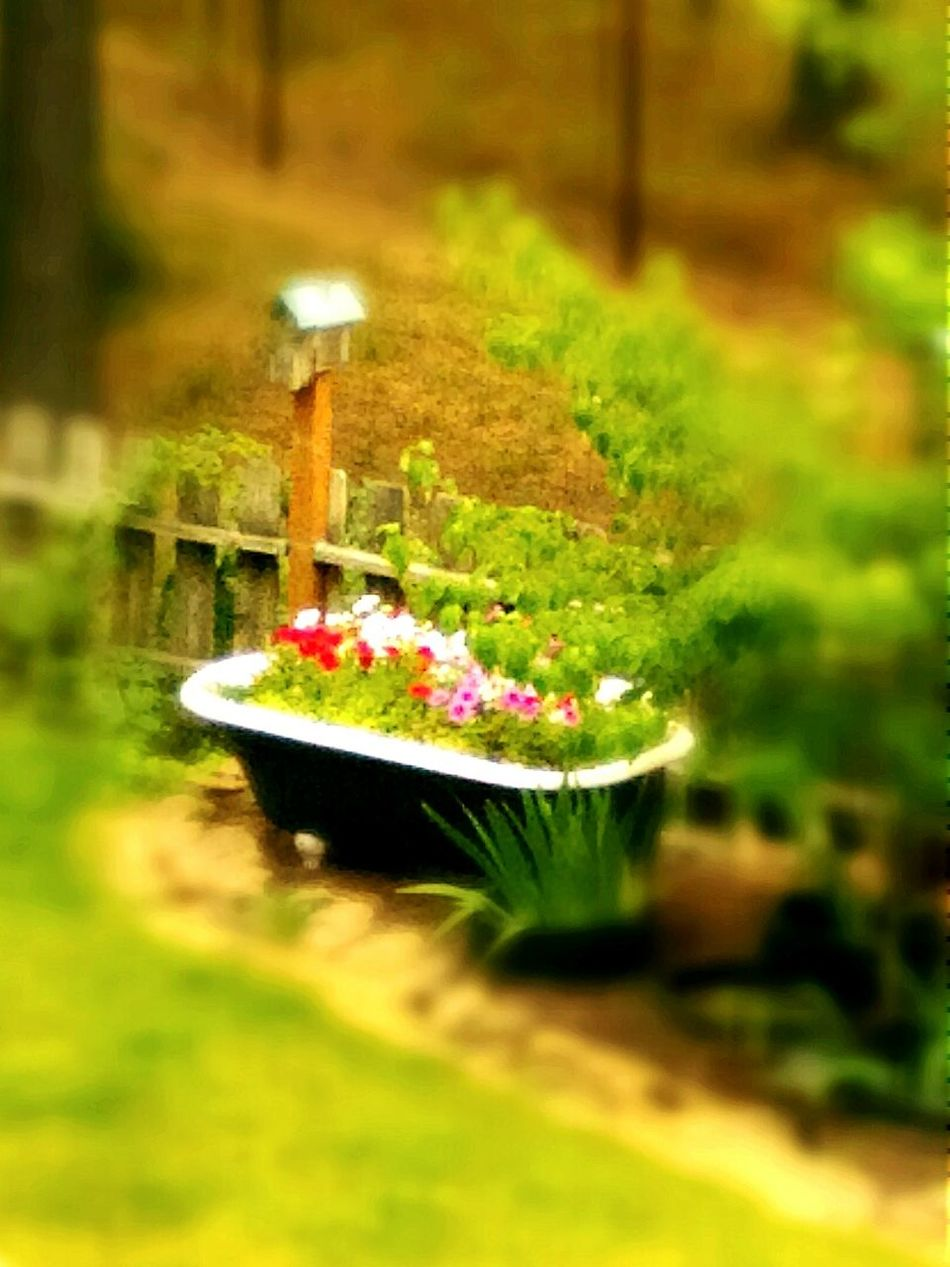 Best use of the old tub. Garden Garten Color Photography Photography Natur Flower Collection Beauty Nature Fast Through A Slow-motion Landscape Capturing Beauty