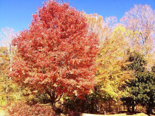 Beautiful, bright autumn afternoon. Enjoying The Moment Beautiful Nature trees autumn