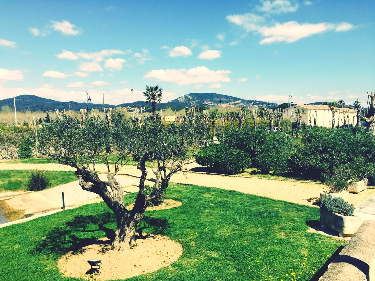 French Lyon Nature Green Beautiful Followme Add Me Suivezmoi Lemon Lime By Motorola