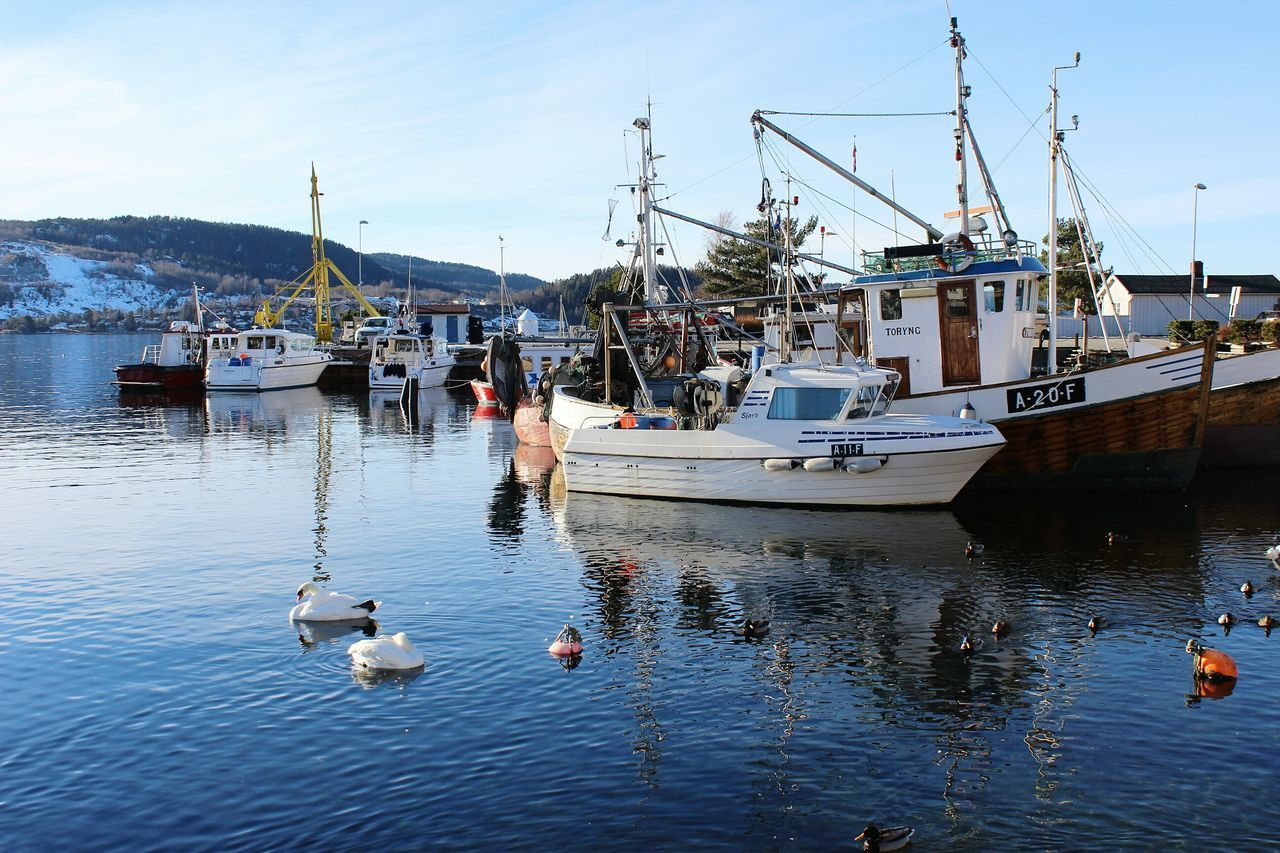 Harbor View Drøbak Oslofjord Norway Outdoors Harbour Pier Boats Sea Scenics Sunlight Travel Destinations Day Sea_collection Reflection Water Swans