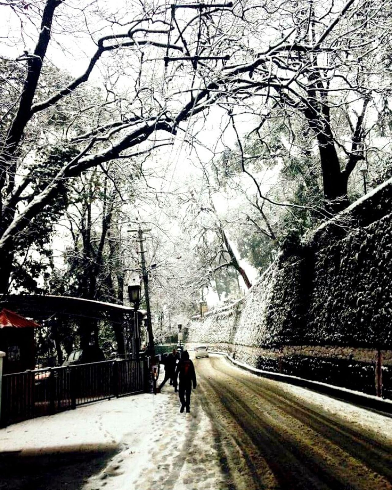 Tree Real People The Way Forward Walking Outdoors Road Nature Beauty In Nature EyeEmNewHere Mountain Range The City Light Minimalist Architecture Carnival Crowds And Details Snow ❄ Everywhere