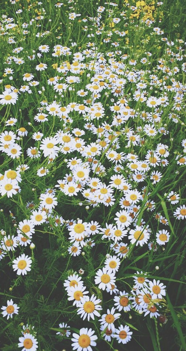 The smell of flowers is amazing.✨ Daisies Bunch Of Magical Thoughts First Eyeem Photo