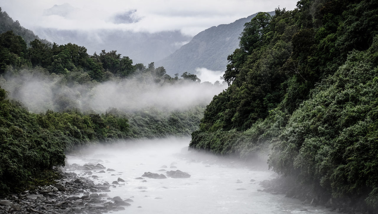 Beauty In Nature EyeEm Masterclass Fog Foggy Foggy Day Foggy Landscape Foggy Morning Foggy Weather Fox Glacier FUJIFILM X-T1 Motion Mysterious Mystery Mystic Mystical New Zealand New Zealand Beauty New Zealand Impressions New Zealand Landscape New Zealand Scenery River Stream Stream - Flowing Water Thermal Thermal Waters