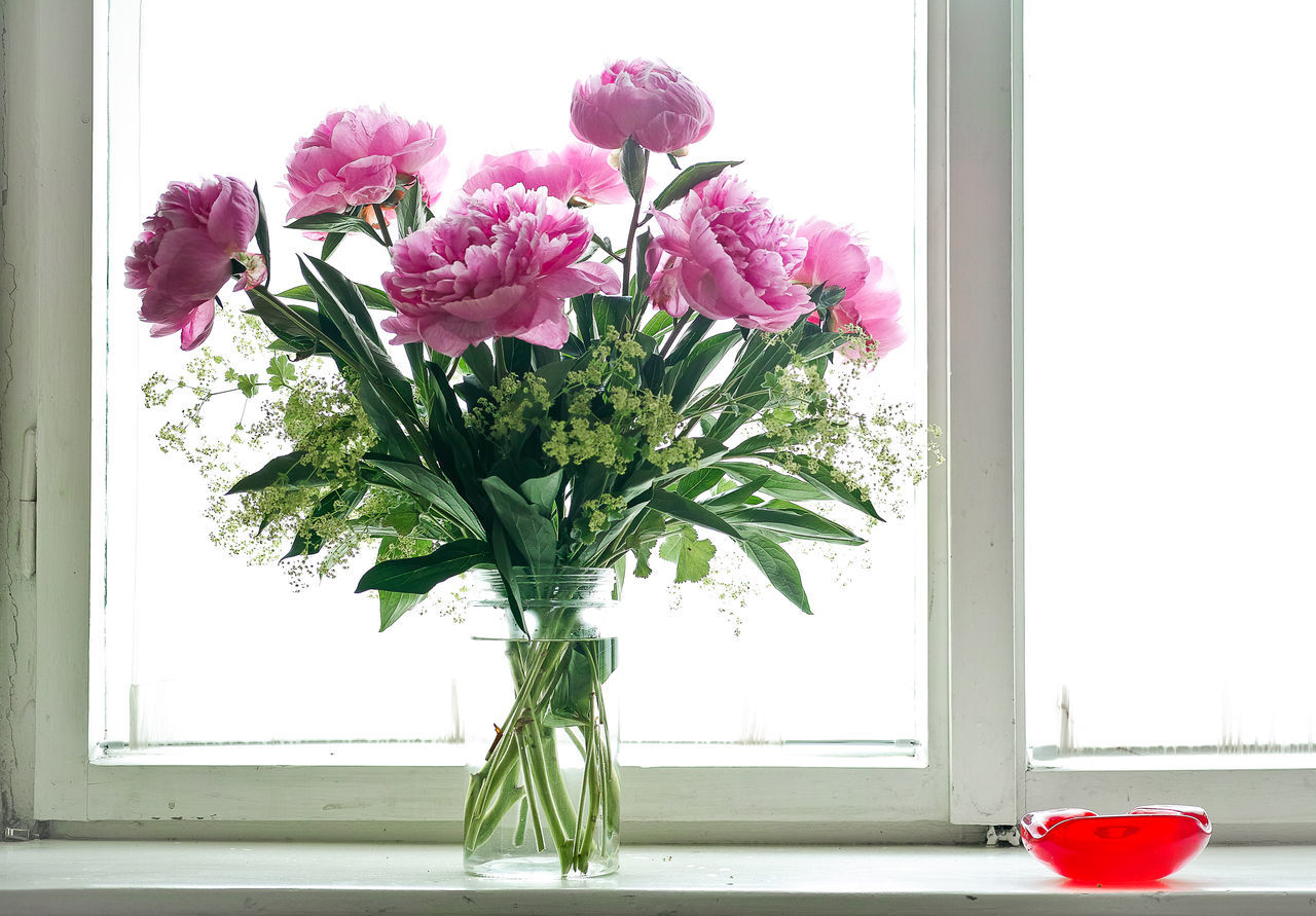 By The Window Flower Indoors  Interior Peony  Pink Color Plant Window