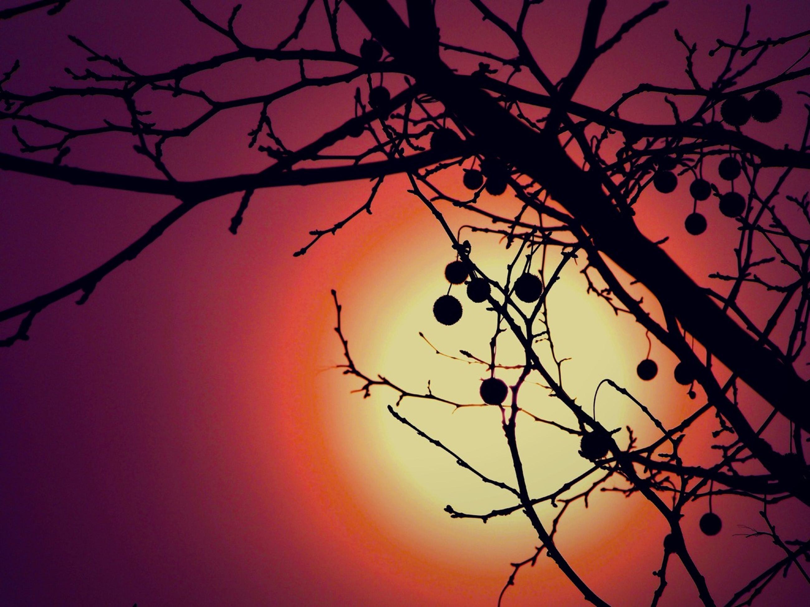 branch, low angle view, silhouette, sunset, tree, sky, bare tree, beauty in nature, orange color, nature, tranquility, scenics, dusk, sun, tranquil scene, idyllic, outdoors, no people, growth, cloud - sky