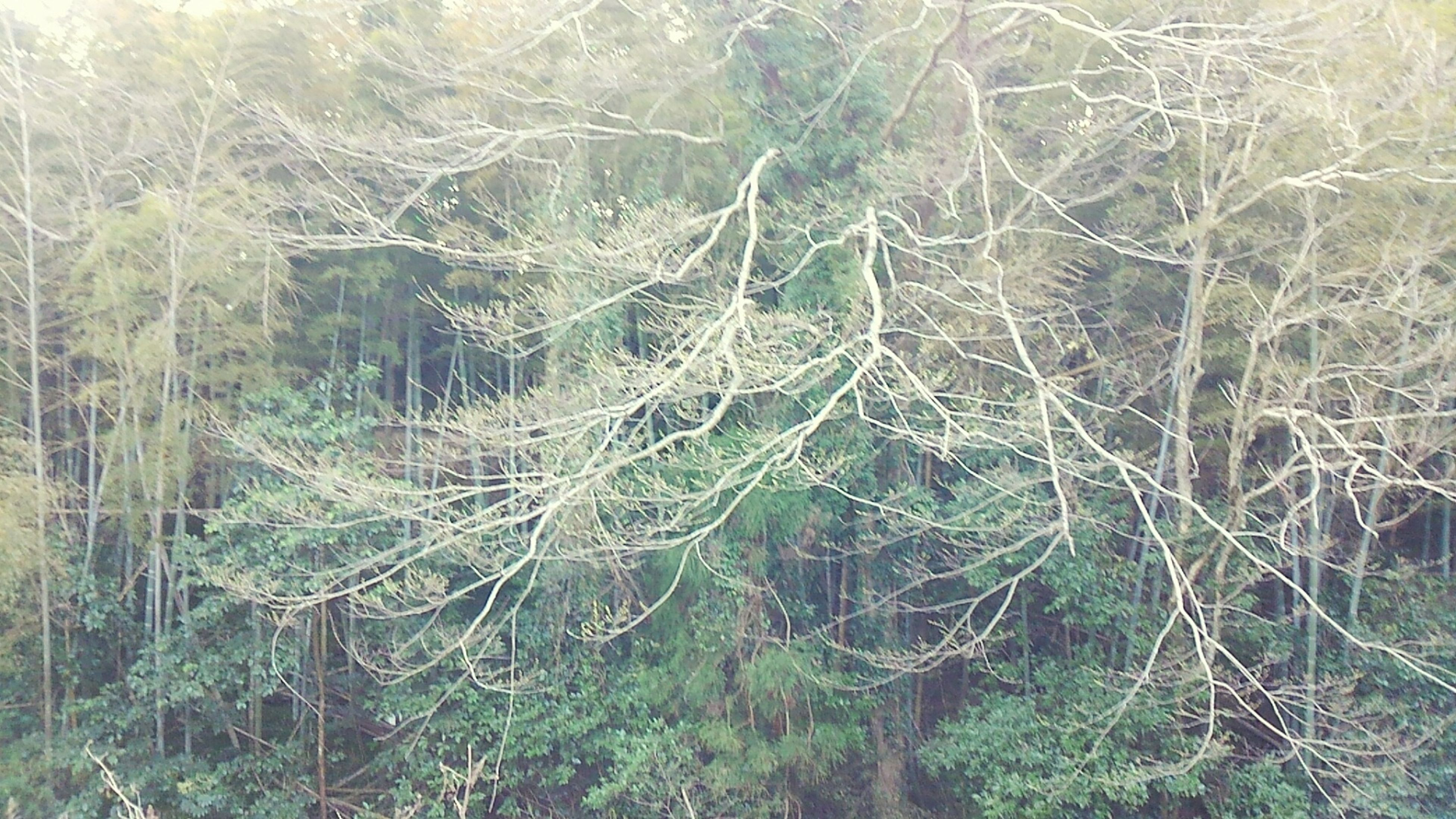 full frame, backgrounds, bare tree, tree, nature, pattern, growth, outdoors, branch, plant, close-up, day, no people, forest, tranquility, spider web, textured, natural pattern, beauty in nature, water