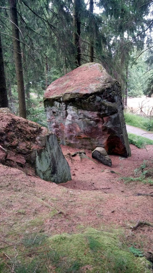Day Feldrom Forest Forest Photography Gebirge Grass Growth Monolith Moss Nature Non-urban Scene Outdoors Rock Rock - Object Sandstein Sandsteinmonolith Sandstone Sandstone Cliffs Teutoburg Forest Teutoburger Wald Tranquil Scene Tranquility Tree Tree Trunk Velmerstot