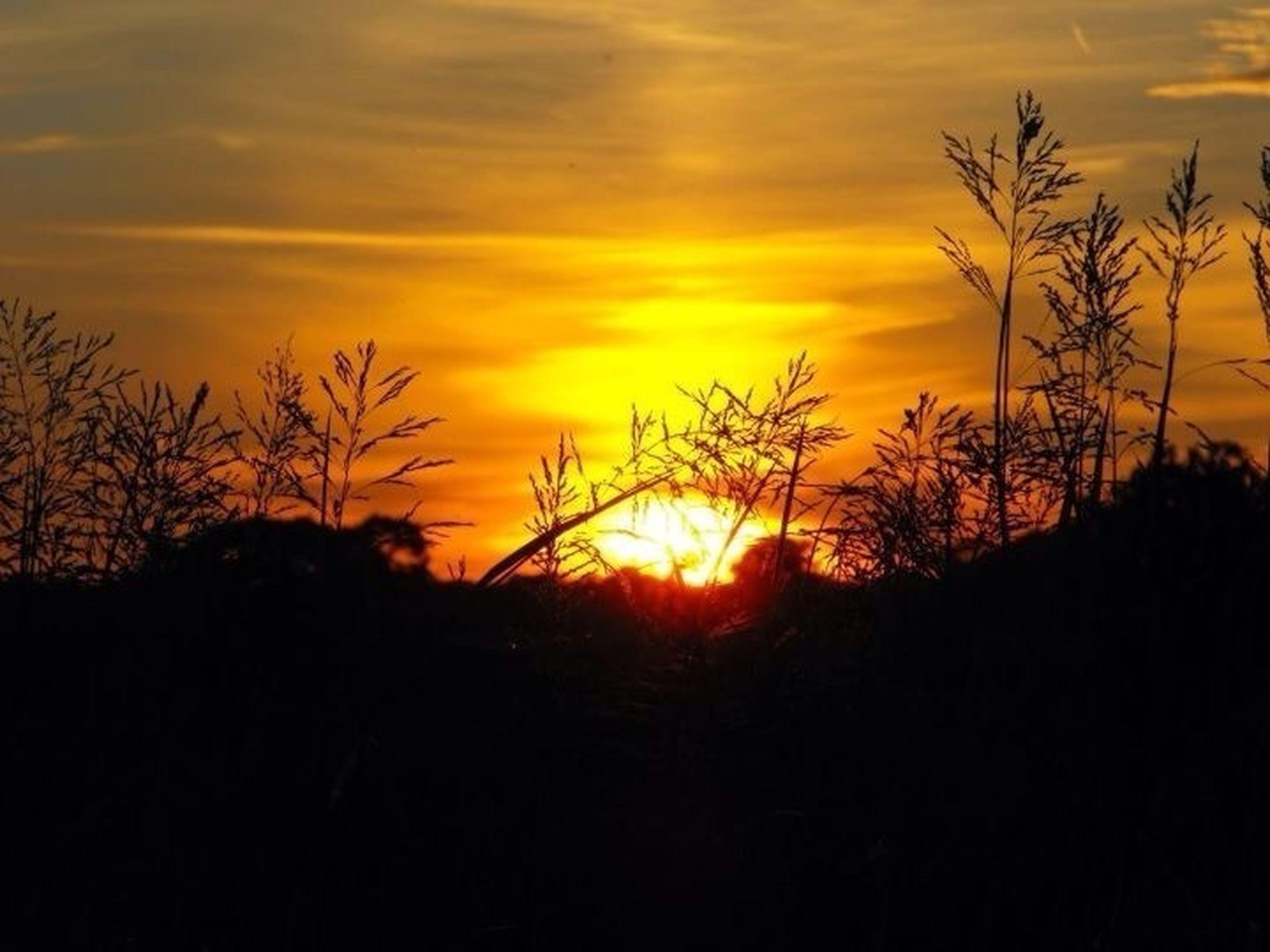 sunset, silhouette, orange color, sun, scenics, tranquil scene, beauty in nature, sky, tranquility, nature, idyllic, landscape, dramatic sky, cloud - sky, field, back lit, dark, moody sky, cloud, outdoors