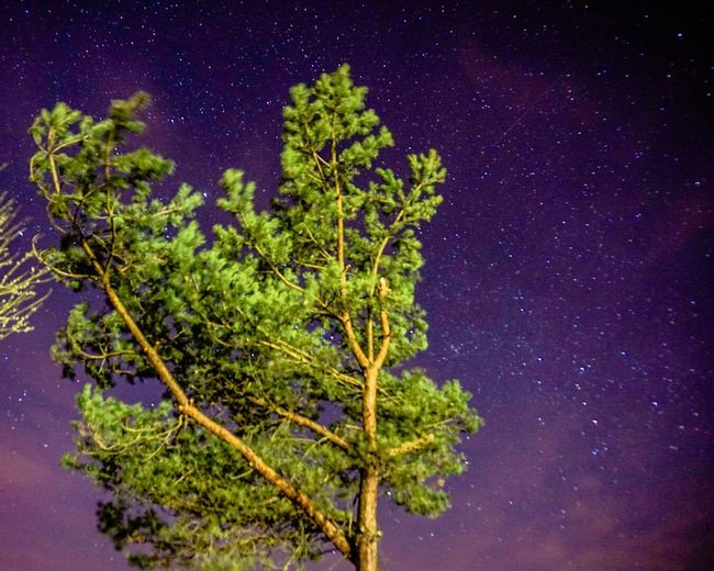 Here Belongs To Me The Countryside At Night Under The Milky Way Starry Sky Starrynight Starry Night Night Nightlights Nightphotography Sony A6000 Night Lights EyeEm Best Shots Thuringen Nature_collection EyeEm Nature Lover Nature Photography Stars Urban Spring Fever