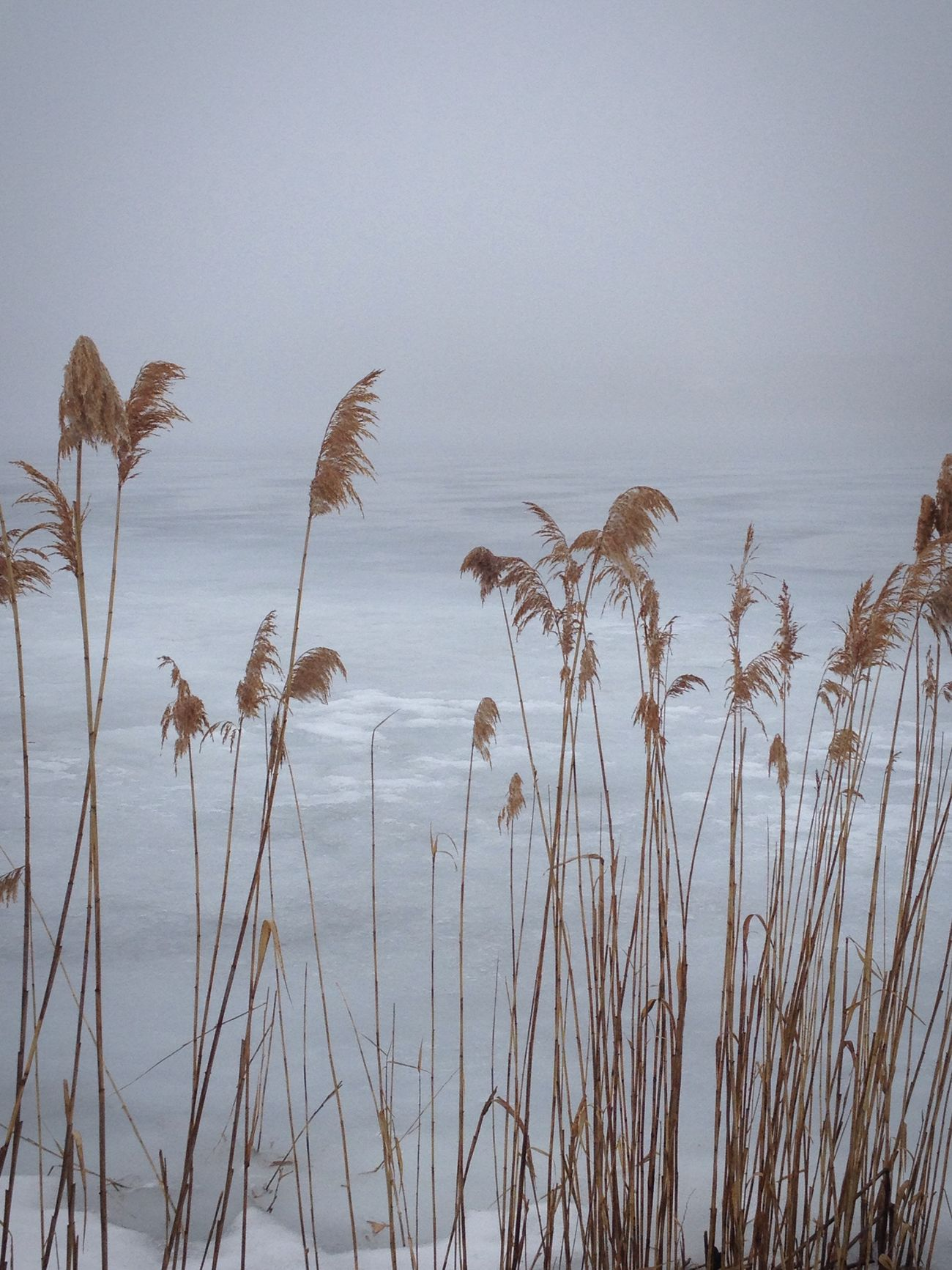 Beachgrass Pond EyeEm Best Shots TheWeekOnEyeEM Simplicity Eye4photography  Onthebeach Spring! Foggy Morning Shoreline